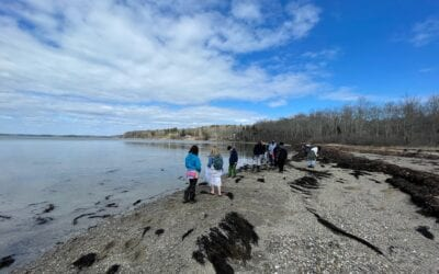Nature Elective at Curtis Cove